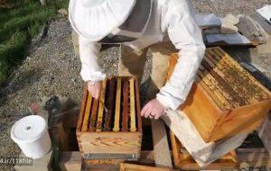 دوره آموزشی زنبورداری پیشرفته بزودی برگزار میشود