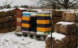 روش تنک و زمستانی کردن کندوهای زنبور عسل
